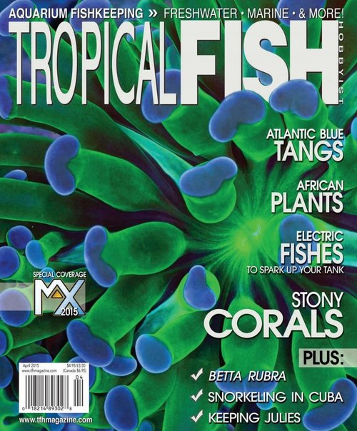 Tropical fish hobbyist april 2015 usa vk co pdf download for Tropical fish magazine