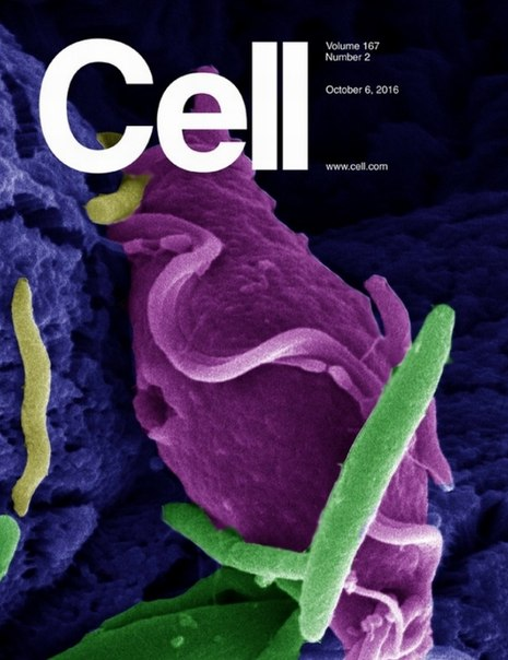 Download Cell - 6 October 2016