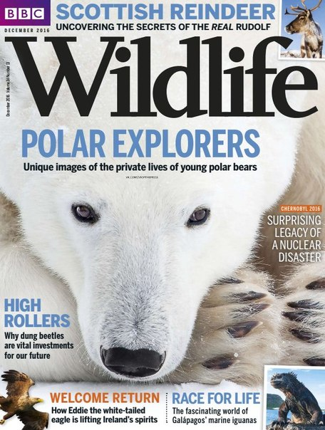 Download BBC Wildlife - December 2016