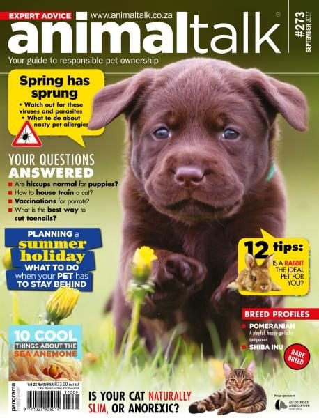 Download Animal Talk — September 2017