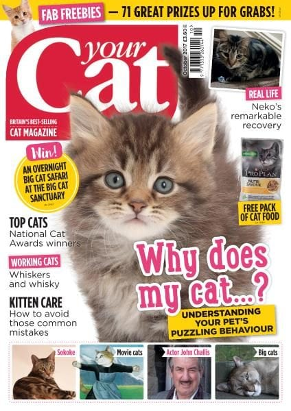 Download Your Cat — October 2017