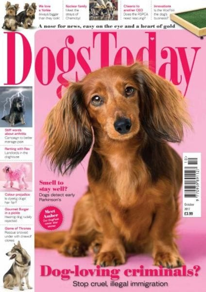Download Dogs Today UK — October 2017