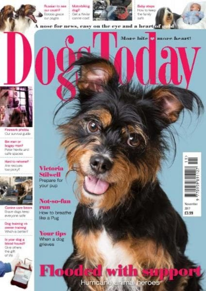Download Dogs Today UK — November 2017