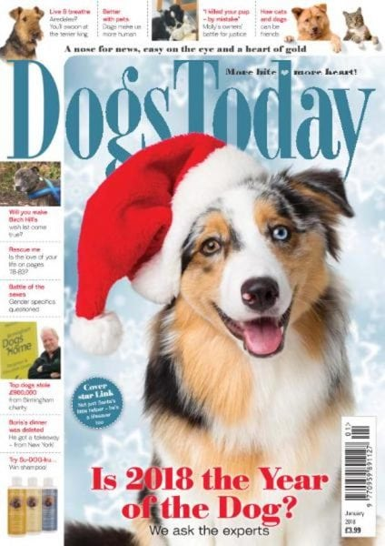 Download Dogs Today UK — January 2018