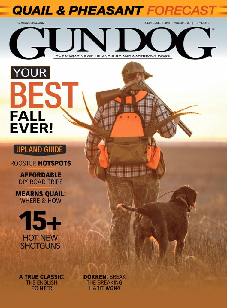 Dogs magazines PDF download online