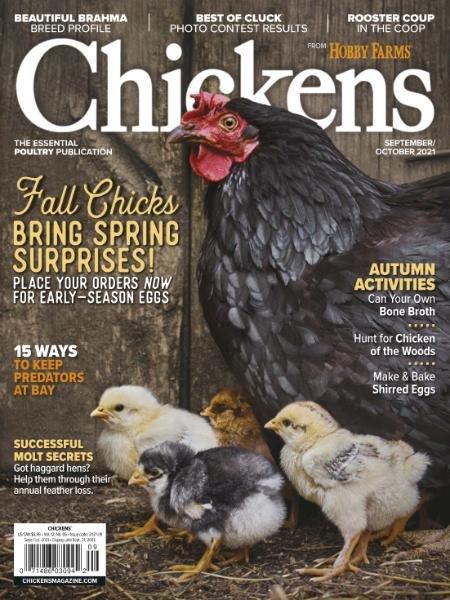 Chickens – September-October 2021
