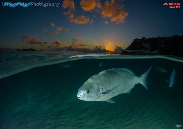 Underwater Photography – July-August 2021